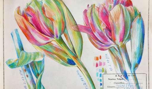 Farbstiftzeichnen und Botanical Diary